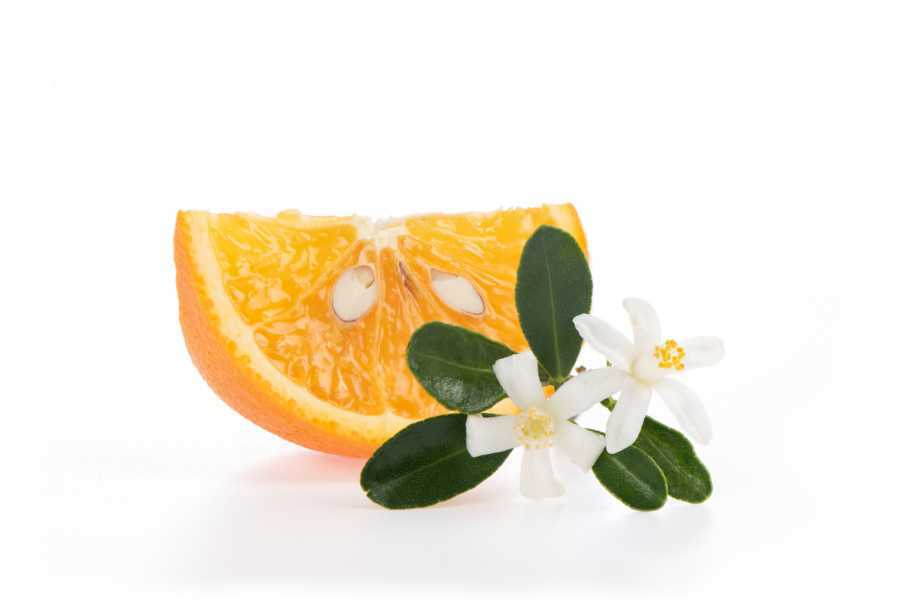 Orange Blossom WEP